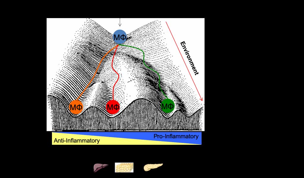 Epigenome landscape