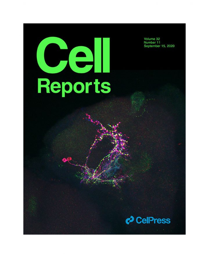 K. Drareni publishes in Cell Reports