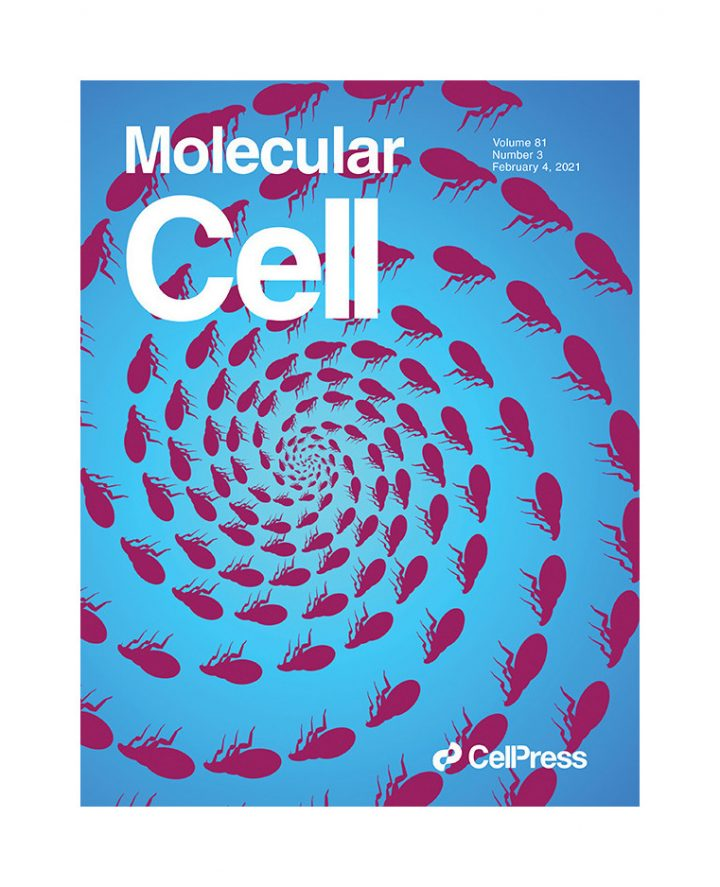 Ballaire and Venteclef publish in Mol. Cell